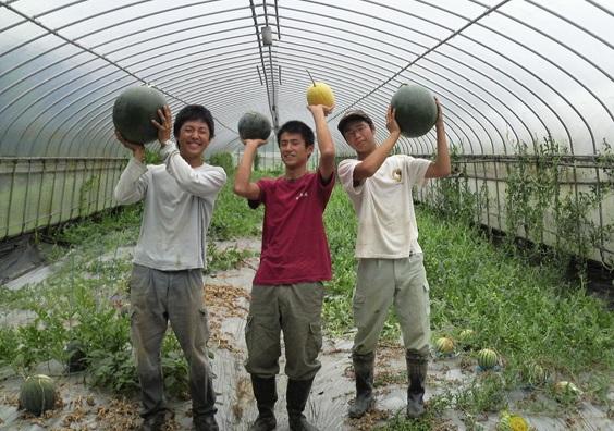 Cần tuyển 10 nam thực tập sinh làm nông nghiệp ở Nhật Bản