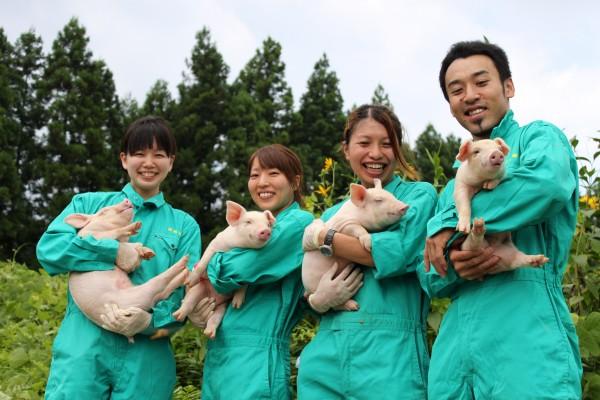 Thực tập sinh ngành nông nghiệp chăn nuôi tại Nhật Bản làm những công việc gì?