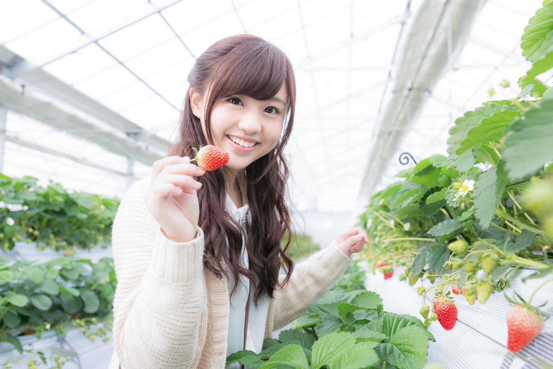 Thực tập sinh ngành nông nghiệp trồng trọt tại Nhật Bản làm những công việc gì?