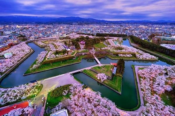 Mách bạn 7 địa điểm đẹp nhất để ngắm hoa anh đào tại Nhật Bản