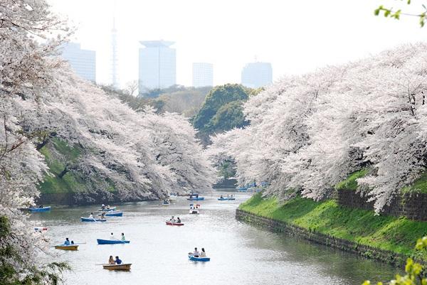 Mách bạn 7 địa điểm đẹp nhất để ngắm hoa anh đào tại Nhật Bản 5
