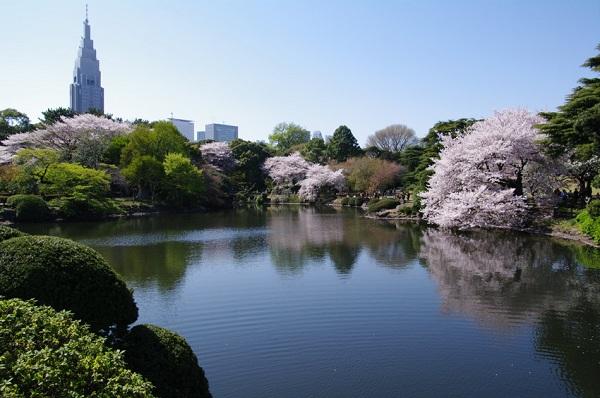 Mách bạn 7 địa điểm đẹp nhất để ngắm hoa anh đào tại Nhật Bản 6