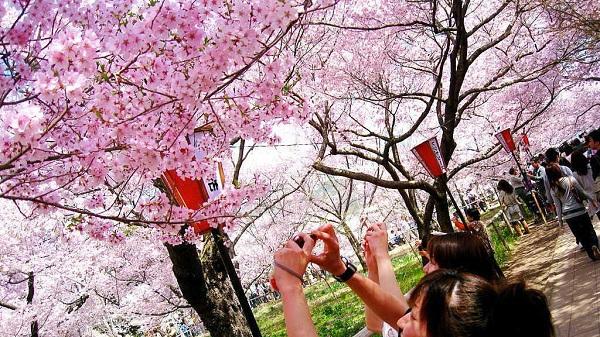 Mách bạn 7 địa điểm đẹp nhất để ngắm hoa anh đào tại Nhật Bản 7
