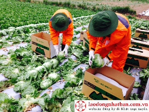 Những đơn hàng nông nghiệp xuất khẩu lao động Nhật Bản dễ trúng tuyển tháng 07/2017