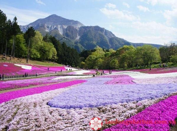 địa điểm du lịch tại saitama