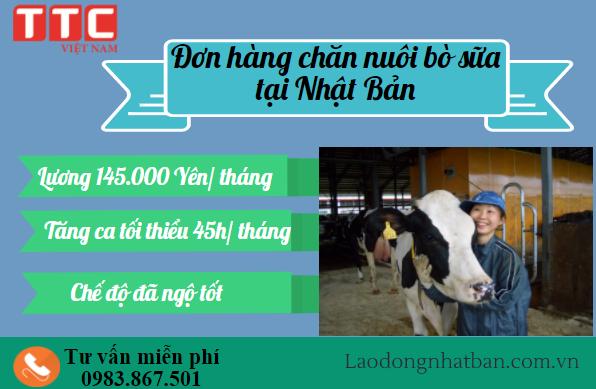 Đơn hàng chăn nuôi bò sữa tại Hokkaido dành cho cả nam lẫn nữ