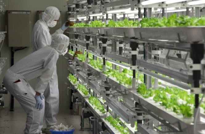 Ngành nông nghiệp ở Nhật Bản phát triển đến mức nào?