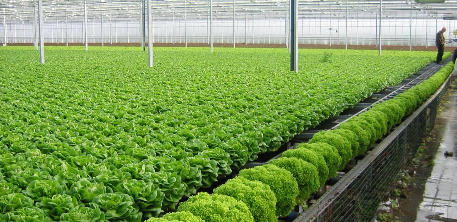 Tuyển 6 nam làm trồng trọt nông nghiệp tại Osaka