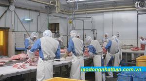 Tuyển gấp 15 nam chế biến thịt bò tại tỉnh Tokyo, Nhật Bản tháng 12/2020