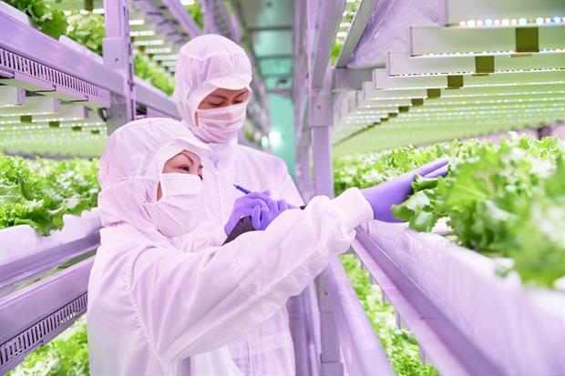 Xuất khẩu lao động Nhật Bản: Trồng rau, hái cà chua… với mức lương trăm triệu