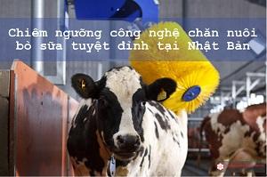 Cận cảnh công nghệ chăn nuôi bò sữa tuyệt đỉnh tại Nhật Bản