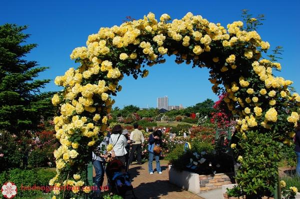 Công viên hoa hồng Keisei