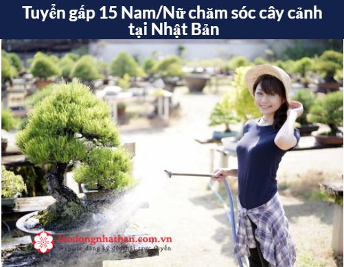 Đơn hàng CHĂM SÓC CÂY CẢNH tỉnh Gifu Nhật Bản cần tuyển 15 Nữ