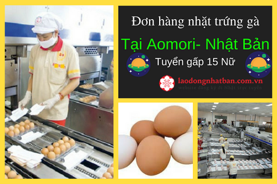 Nhanh tay đăng ký Đơn hàng nhặt trứng trong dây chuyền tuyển 15 Nữ làm tại Aomori Nhật Bản