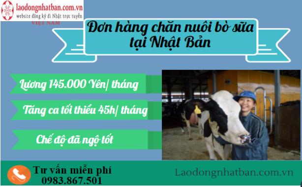 Đơn hàng chăn nuôi bò sữa tại HOKKAIDO dành cho cả Nam và Nữ
