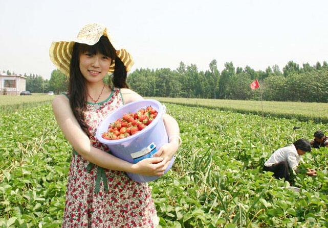 TOP 5 đơn hàng nông nghiệp XKLĐ Nhật Bản Lương cao, dễ trúng tuyển tháng 05/2019
