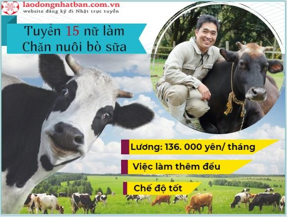 Tuyển 15 Nữ làm chăn nuôi bò sữa tại tỉnh AICHI Nhật Bản