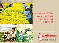 Đơn hàng trồng hoa Nhật Bản: LƯƠNG CAO, CHI PHÍ THẤP