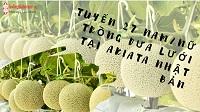 Tuyển 27 Nam/Nữ trồng dưa lưới tại Akita Nhật Bản