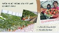 ĐƠN HOT: Tuyển 45 Nữ trồng dâu tây quay lại Nhật lần 2 làm việc trong nhà kính CHI PHÍ CỰC THẤP
