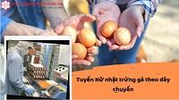 Tuyển 36 Nữ nhặt trứng gà theo dây chuyền tại Gunma Nhật Bản