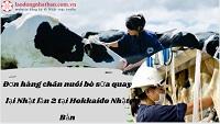 Đơn hàng chăn nuôi bò sữa quay lại Nhật lần 2 tại Hokkaido Nhật Bản