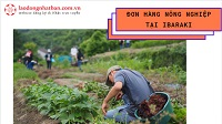 Đơn hàng nông nghiệp tại Ibaraki lương 33 triệu/tháng