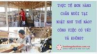 Thực tế đơn hàng chăn nuôi tại Nhật như thế nào? Công việc có vất vả không?