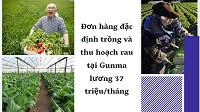 Đơn hàng đặc định trồng và thu hoạch rau tại Gunma lương 37 triệu/tháng