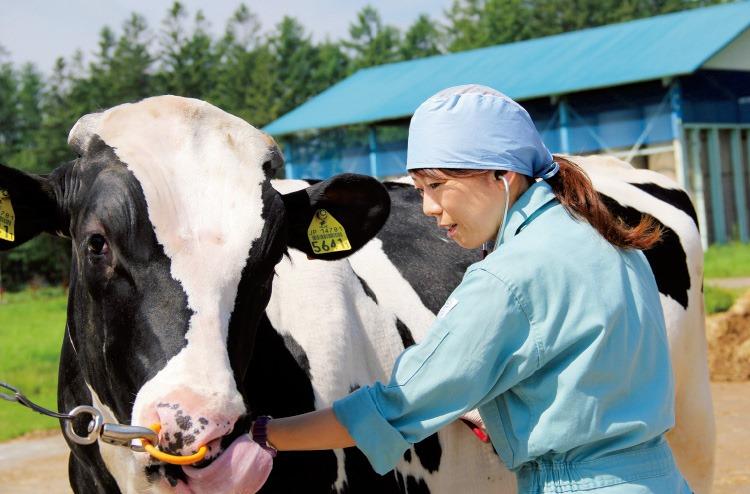 Tuyến 45 Nam/Nữ làm Chăn nuôi bò sữa tại Gunma Nhật bản - Gửi hồ sơ không cần thi tuyển