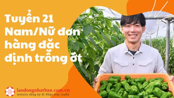 HOT: Tuyển 21 Nam/Nữ đơn hàng đặc định trồng ớt làm việc tại KYOTO - CHI PHÍ THẤP